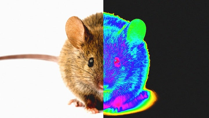 4 Thermal Cameras to detect mice and pests | 2021