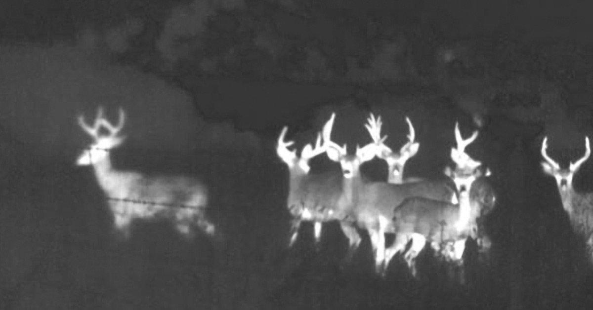 Best Wildlife Thermal Cameras   2021
